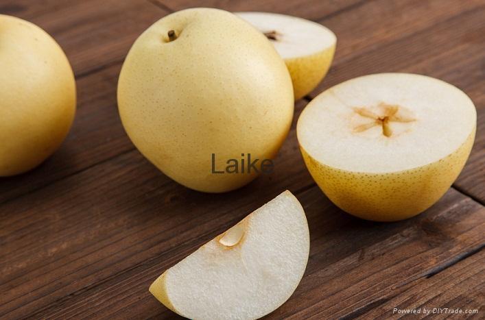 Golden Pear 3