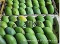 Fresh Quality Mango