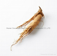 Supply Best Quality Siberian Ginseng Extract