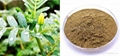 Top quality Tribulus Terrestris Extract