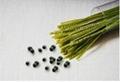 soybean noddle