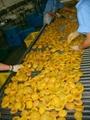網帶式食品輸送機