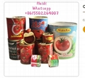 canned xinjiang tomato paste brix 70g
