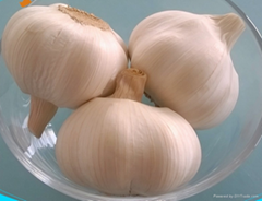 China garlic 5cm size fresh garlic