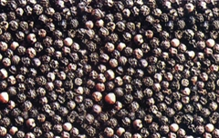 Vietnam Black Pepper 500/550gl White pepper 630g/l
