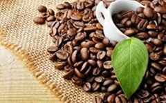 Good Roasted coffee bean in bulk