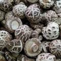 Dried White Flower Shiitake Mushroom