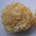 Dried White Fungus