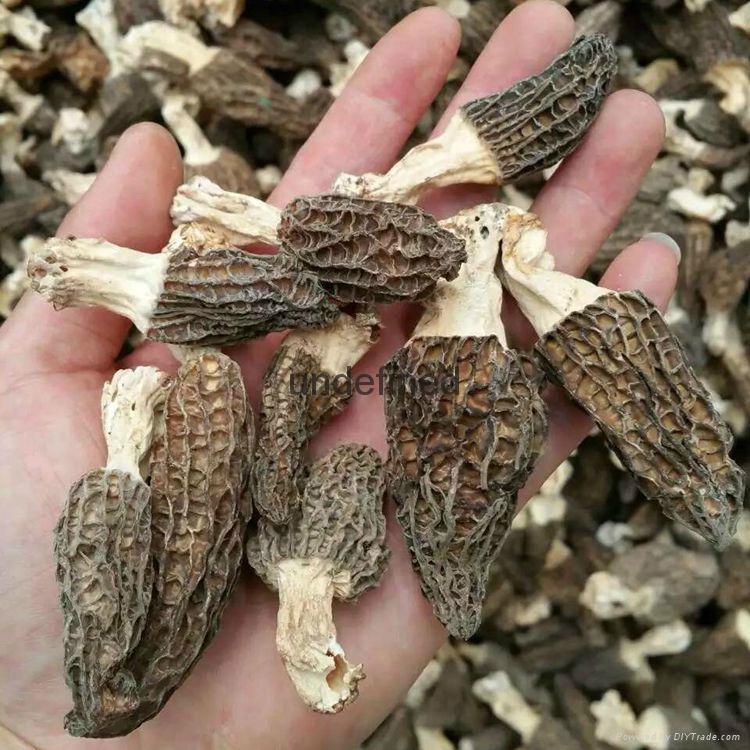 Factory Price Premium Dried Morel Mushroom 1