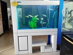 济南鱼缸养护