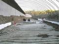 碳纤维发热电缆温室大棚 4
