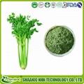 Manfacturer supply 98% apigenin extract,