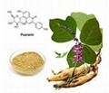 Kudzu root extract 40% puerarin powder