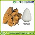 Giant knotwood extract resveratrol