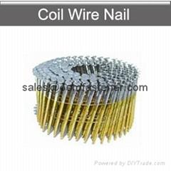 Coil nails pallet nails