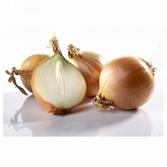 Fresh Red Onions, Fresh Yellow Onions, Fresh White Onions Wholesale