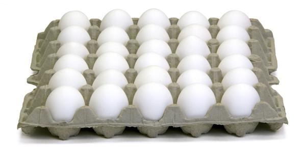 Fresh Chicken Eggs Wholesale
