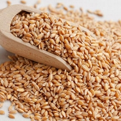 Premium Quality Wheat Grain From Ukraine