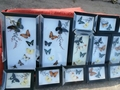 PAINTING BUTTERFLY FROM VIET NAM 3