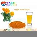 天然食品着色剂叶黄素