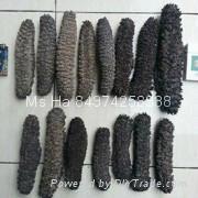 Dried Sea Cucumber From Vietnam Black Prickly Fish Sand Fish White Teat Fish