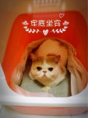 Textured Bentonite Cat Litter