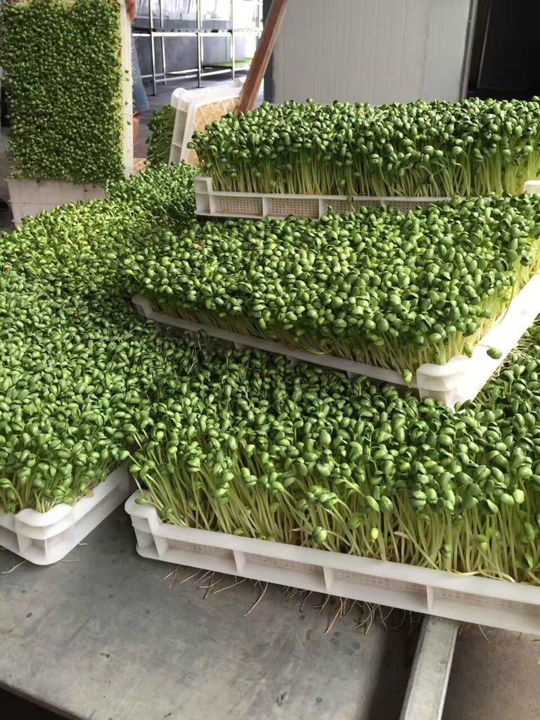 Germination machine/ Barley machine/ Seed germination machine 4