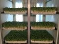 Germination machine/ Barley machine/ Seed germination machine 7