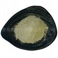 kelp powder 4