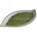 ulva powder  natural seaweed powder 2