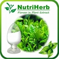 Green Tea Extract 98% L-theanine