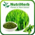 Natural Wheat Grass Powder
