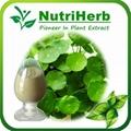 Natural Gotu Kola Extract