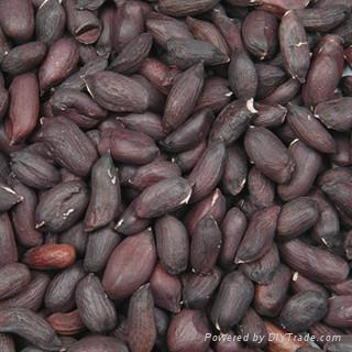 offer hand picked and selected black peanut kernel  rich in selenium from China 1