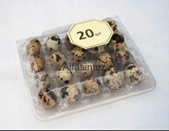 Plastic Tray for quail eggs (10,20,56 pcs)