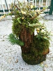 铁皮石斛盆栽怎么种植