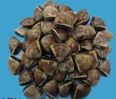 FROZEN COOKED BROWN WHOLE CLAM