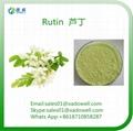 Plant Extract Powder Rutin CAS