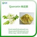 Natural Herbal Extract Quercetin HPLC95%