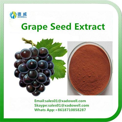 Hot Selling Grape seed Extract OPC 95% 1
