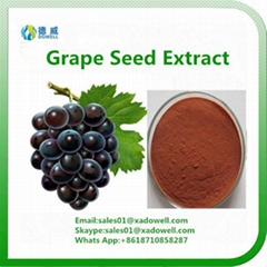 Hot Selling Grape seed Extract OPC 95%