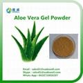 Nutritional Ingredients Aloe Vera Gel