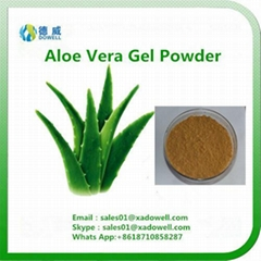 Nutritional Ingredients Aloe Vera Gel Powder