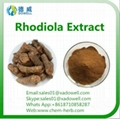 Well sold and top quality rhodiola rosea