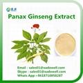 Panax ginseng Extract 80% Ginsenosides 1