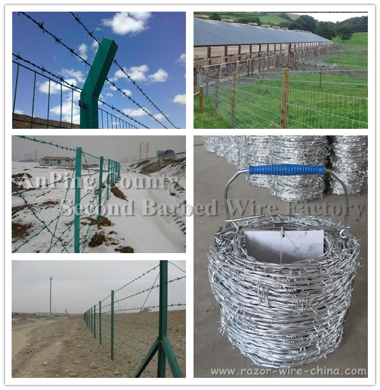 normal hot-dipped galvanizing barbed wire 5