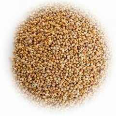 Top Sale! Yellow Millet