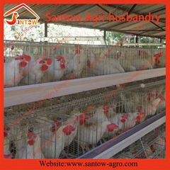 Auto chicken battery cages poultry battery laying cages for poultry farms