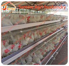 Chicken use welded wire chicken layer cages chicken coop hen house