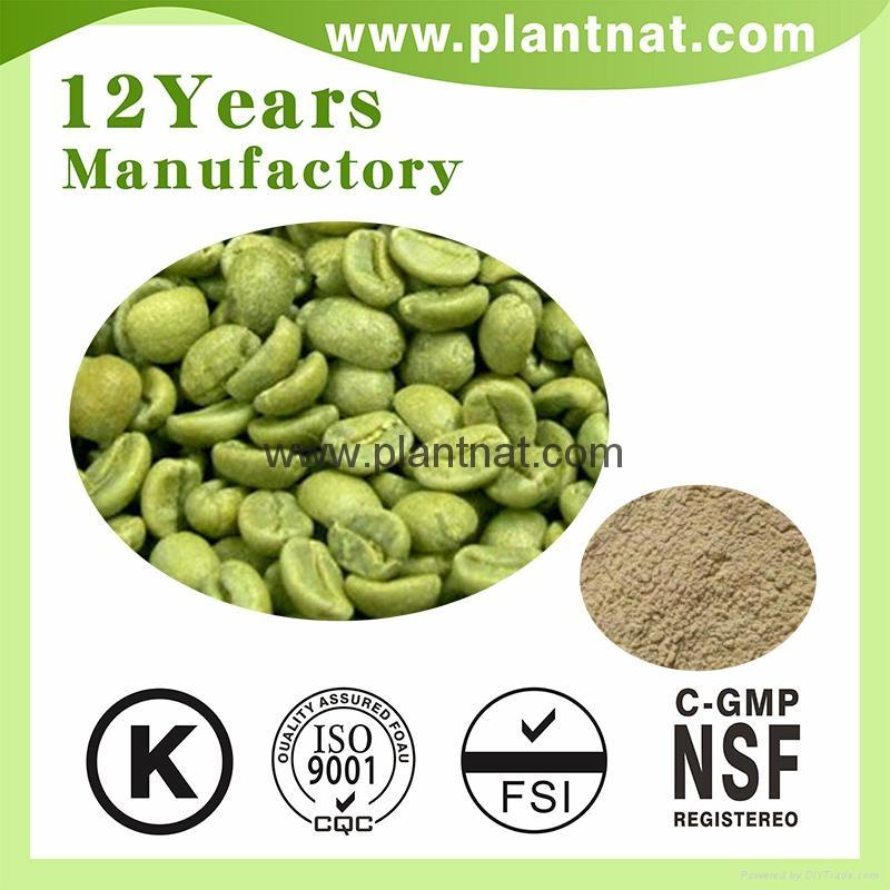 Green Coffee Bean Extract Chlorogenic Acid 50% 1